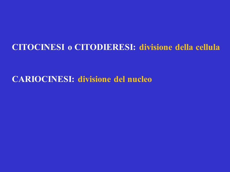 CITOCINESI o CITODIERESI: divisione della cellula CARIOCINESI: divisione del nucleo