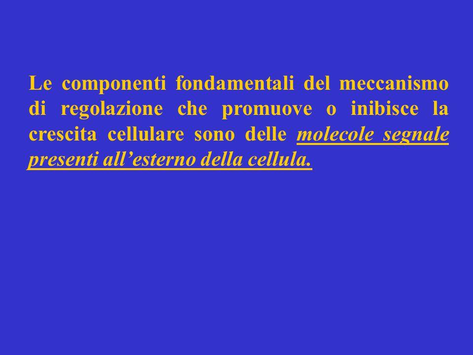 Le componenti fondamentali del meccanismo di regolazione che promuove o inibisce la crescita cellulare sono delle molecole segnale presenti all'esterno della cellula.