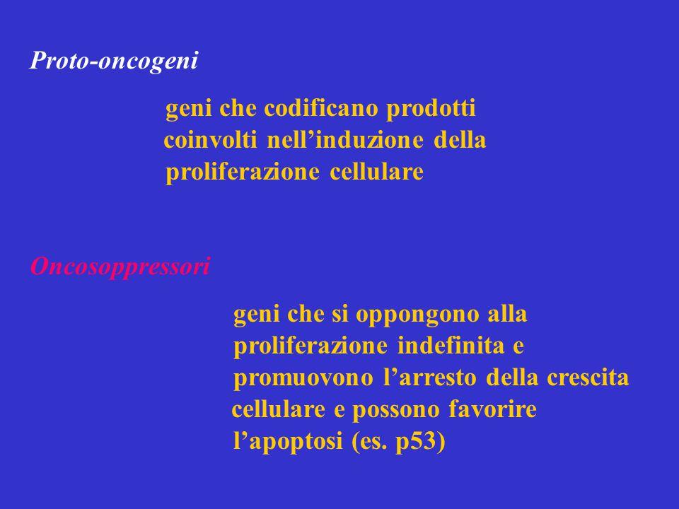 Proto-oncogeni geni che codificano prodotti coinvolti nell'induzione della proliferazione cellulare Oncosoppressori geni che si oppongono alla proliferazione indefinita e promuovono l'arresto della crescita cellulare e possono favorire l'apoptosi (es.