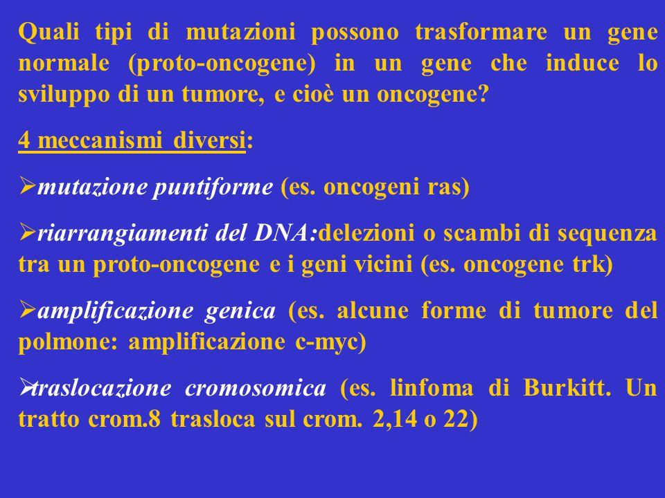 Quali tipi di mutazioni possono trasformare un gene normale (proto-oncogene) in un gene che induce lo sviluppo di un tumore, e cioè un oncogene.