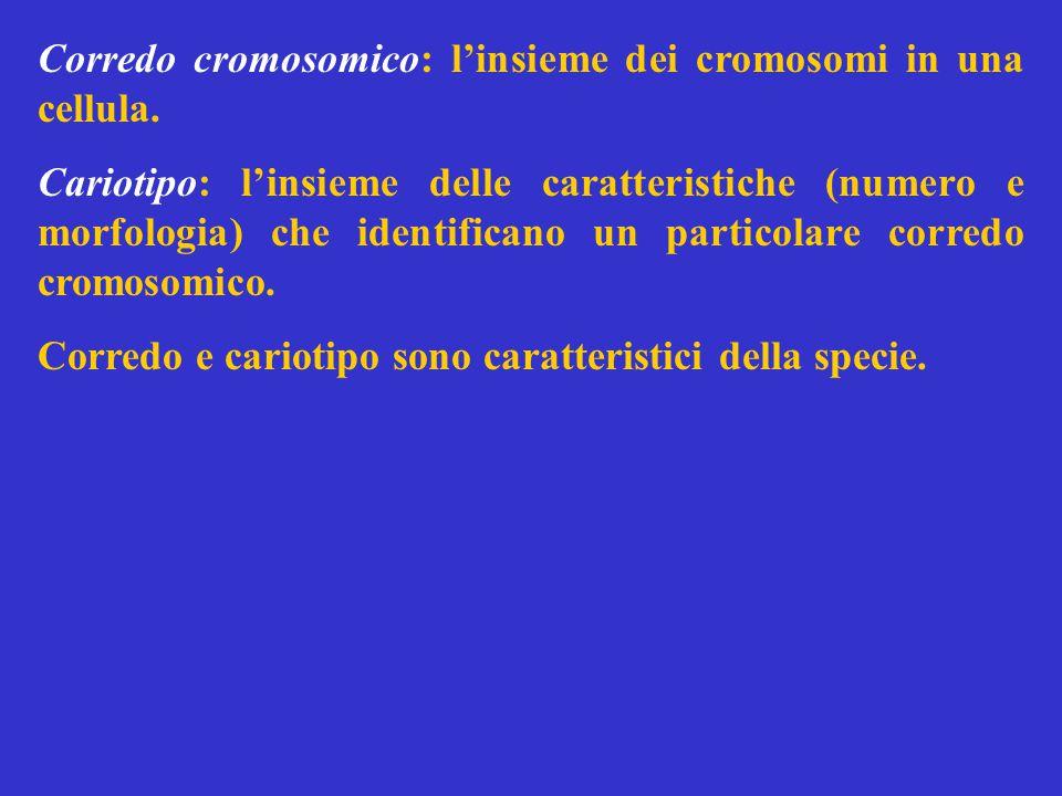 Corredo cromosomico: l'insieme dei cromosomi in una cellula.