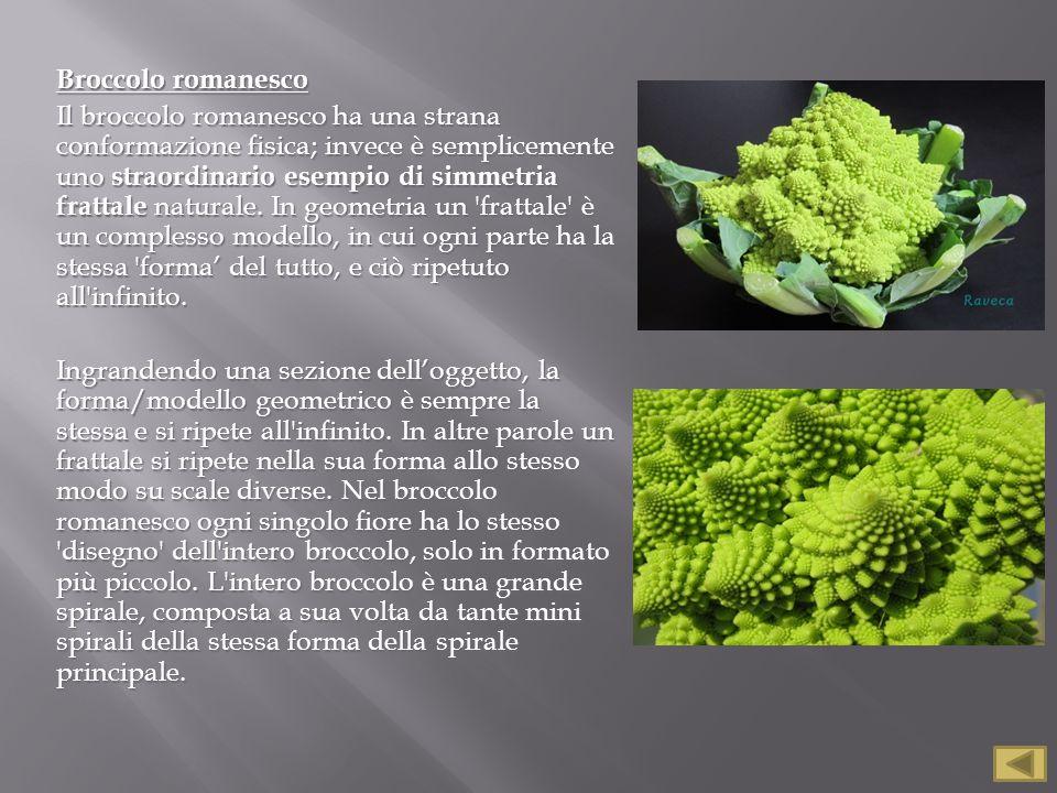 Broccolo romanesco Il broccolo romanesco ha una strana conformazione fisica; invece è semplicemente uno straordinario esempio di simmetria frattale na