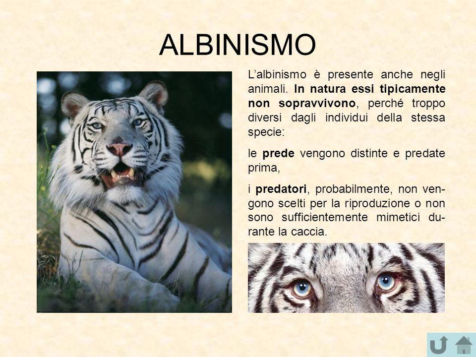 ALBINISMO L'albinismo è presente anche negli animali. In natura essi tipicamente non sopravvivono, perché troppo diversi dagli individui della stessa