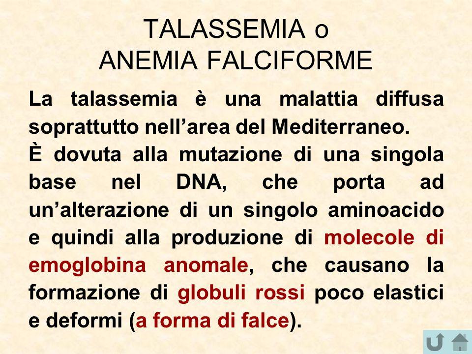 TALASSEMIA o ANEMIA FALCIFORME La talassemia è una malattia diffusa soprattutto nell'area del Mediterraneo. È dovuta alla mutazione di una singola bas