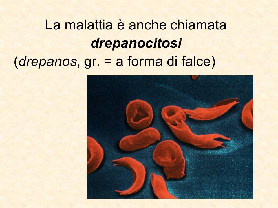 La malattia è anche chiamata drepanocitosi (drepanos, gr. = a forma di falce)
