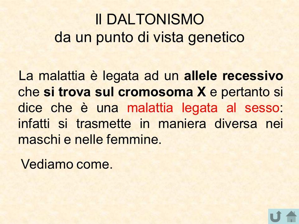 Il DALTONISMO da un punto di vista genetico La malattia è legata ad un allele recessivo che si trova sul cromosoma X e pertanto si dice che è una mala