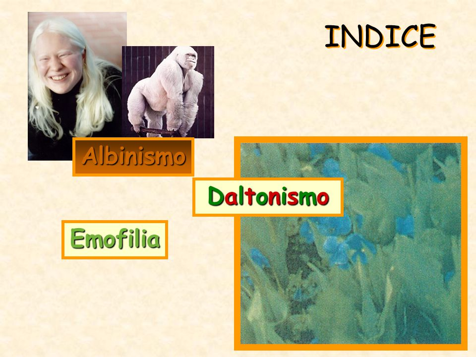 INDICE Emofilia Albinismo DaltonismoDaltonismoDaltonismoDaltonismo