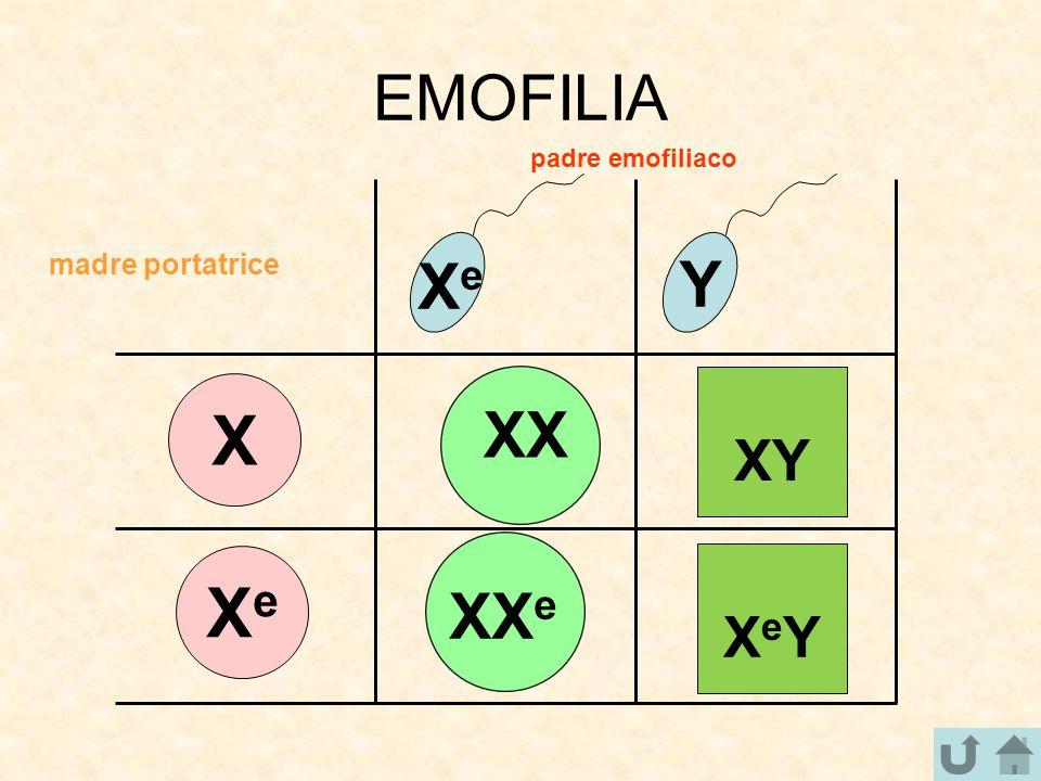 EMOFILIA X XeXe XeXe Y padre emofiliaco madre portatrice XX e XX XY XeYXeY