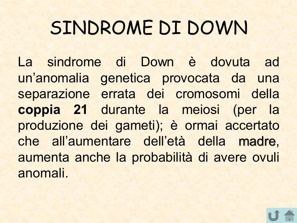 SINDROME DI DOWN madre La sindrome di Down è dovuta ad un'anomalia genetica provocata da una separazione errata dei cromosomi della coppia 21 durante