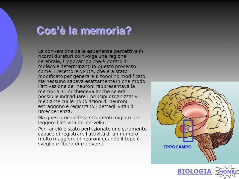 Cos'èla memoria. Cos'è la memoria.
