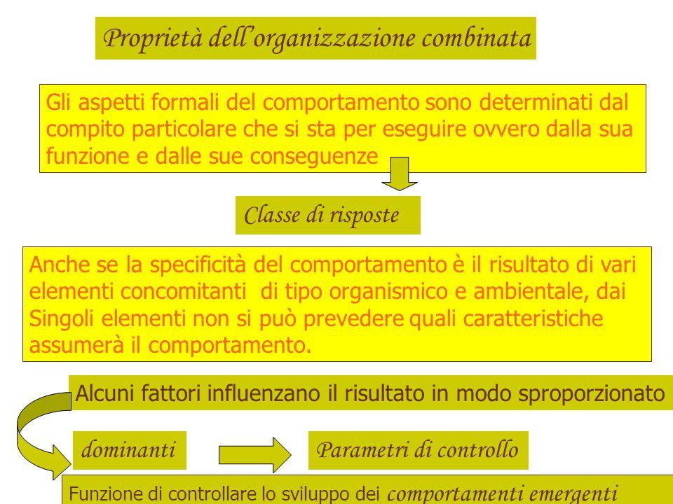 Organizzazione coalescente o organizzazione combinata È il termine che indica il processo dinamico, attraverso il quale i vari elementi si riuniscono