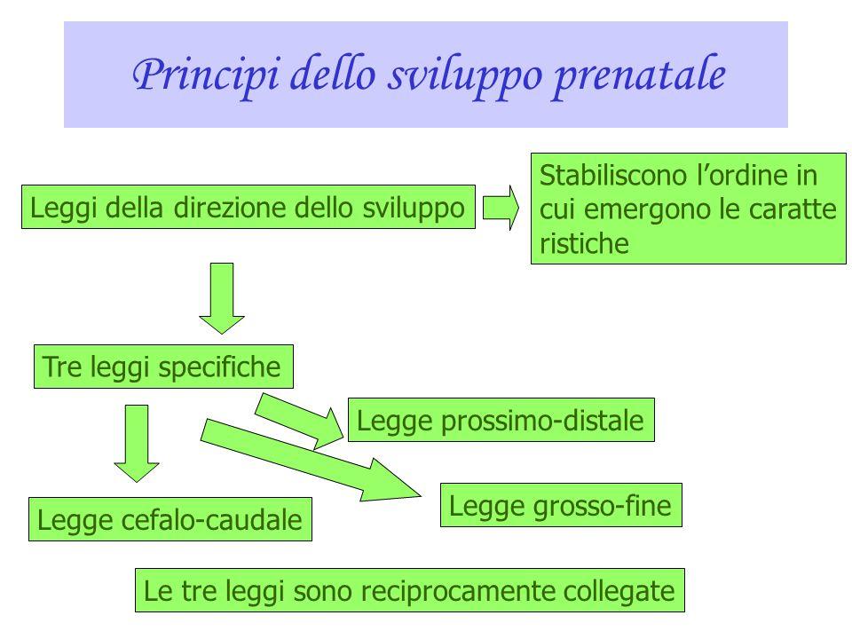 Sviluppo prenatale e nascita Lo sviluppo prenatale avviene tra il momento del concepimento e la nascita. Si divide in: 1. periodo germinale 2. periodo