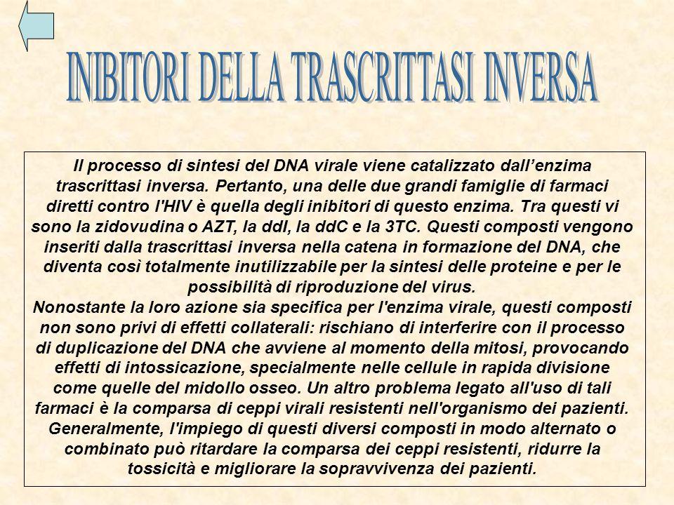 Il processo di sintesi del DNA virale viene catalizzato dall'enzima trascrittasi inversa.