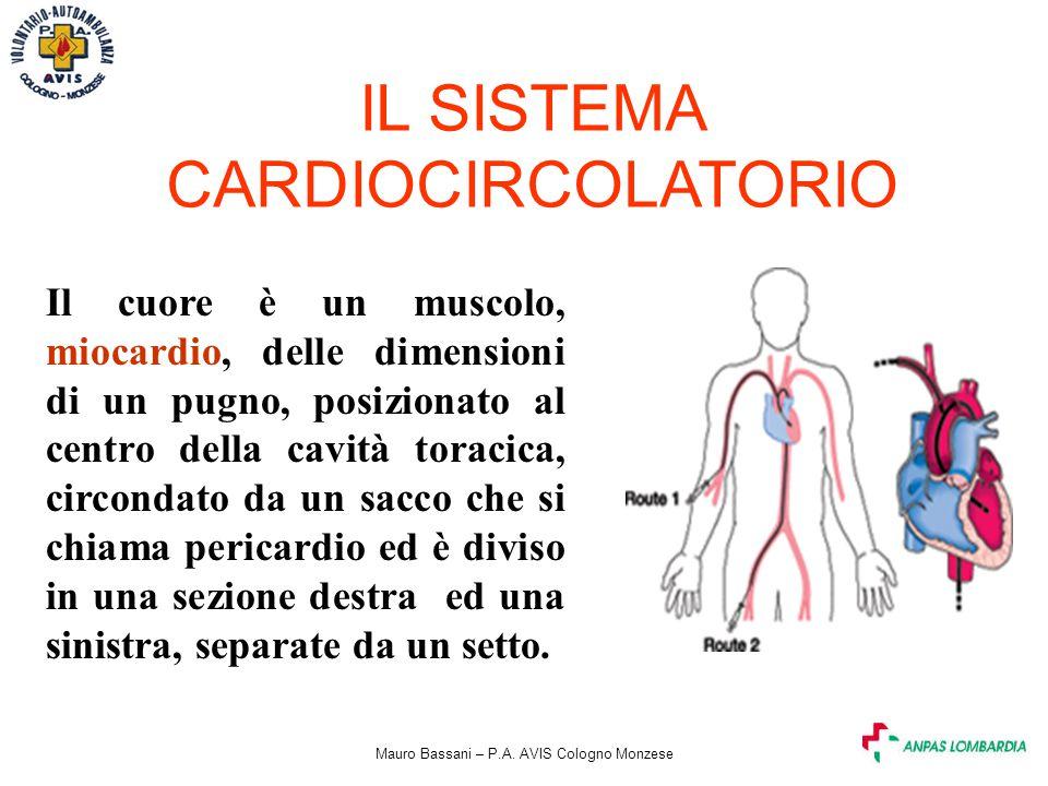 Mauro Bassani – P.A. AVIS Cologno Monzese IL SISTEMA CARDIOCIRCOLATORIO Il cuore è un muscolo, miocardio, delle dimensioni di un pugno, posizionato al