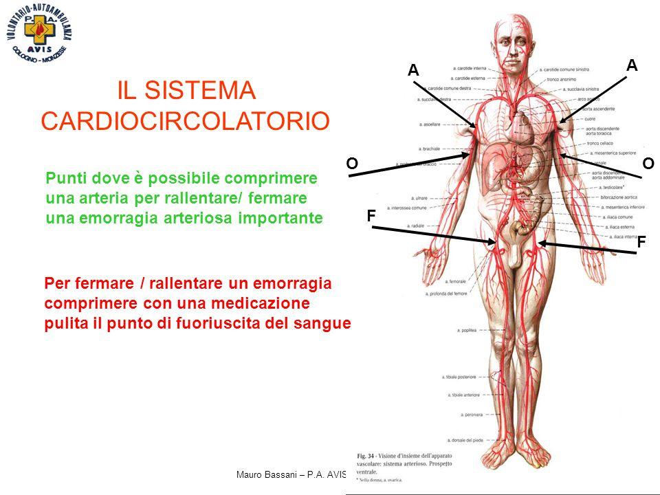 Mauro Bassani – P.A. AVIS Cologno Monzese IL SISTEMA CARDIOCIRCOLATORIO Punti dove è possibile comprimere una arteria per rallentare/ fermare una emor