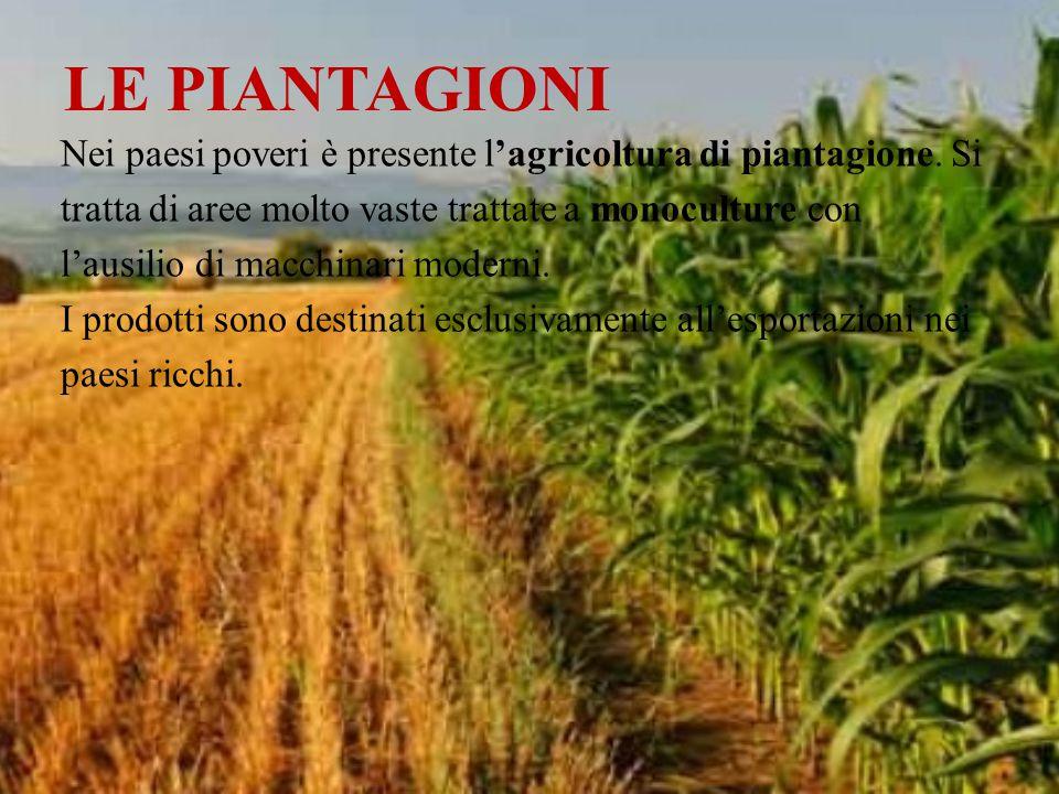 LE PIANTAGIONI Nei paesi poveri è presente l'agricoltura di piantagione. Si tratta di aree molto vaste trattate a monoculture con l'ausilio di macchin