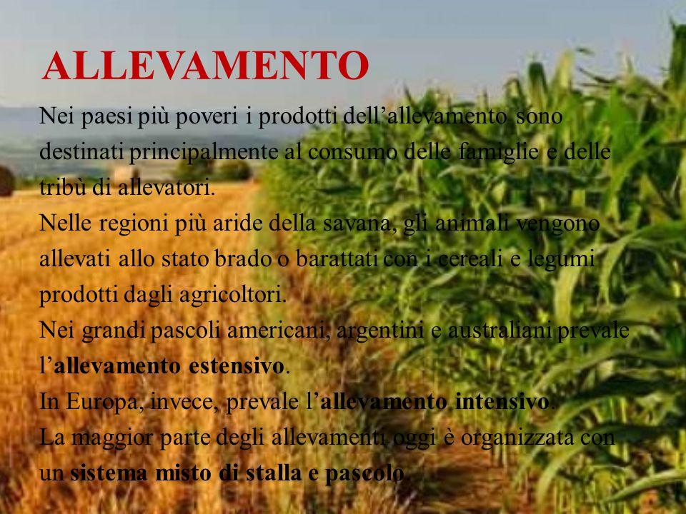 ALLEVAMENTO Nei paesi più poveri i prodotti dell'allevamento sono destinati principalmente al consumo delle famiglie e delle tribù di allevatori. Nell