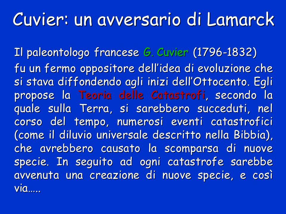 Cuvier: un avversario di Lamarck Il paleontologo francese G. Cuvier (1796-1832) fu un fermo oppositore dell'idea di evoluzione che si stava diffondend
