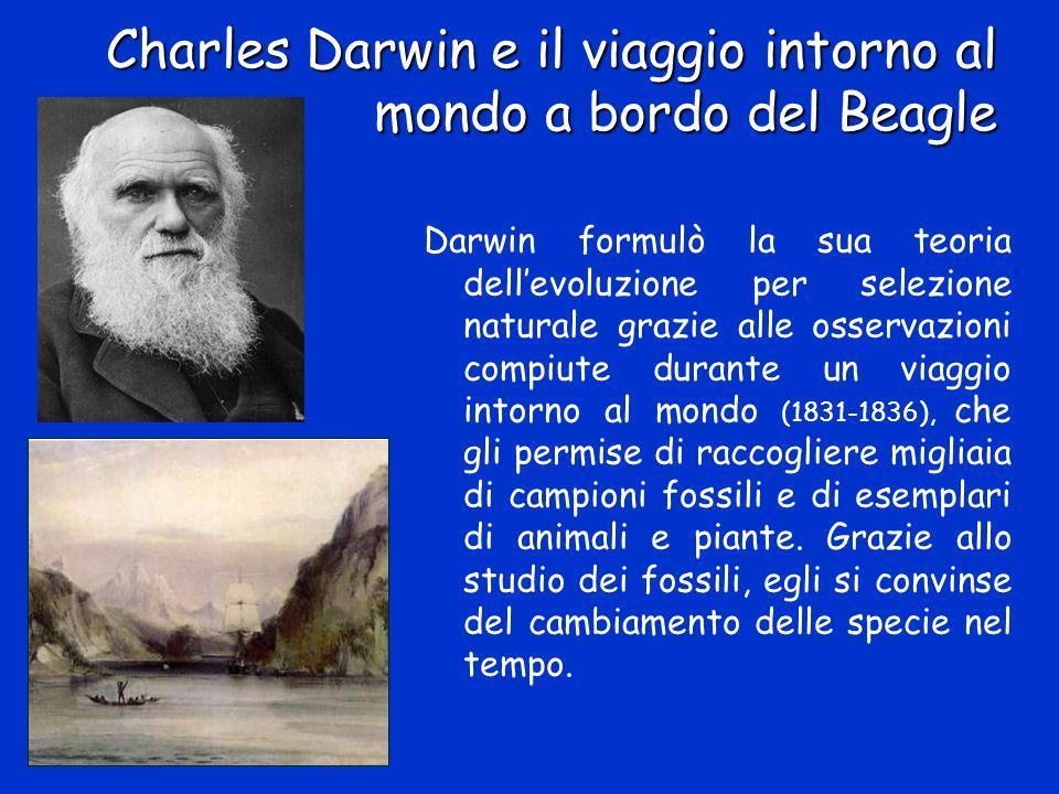 Charles Darwin e il viaggio intorno al mondo a bordo del Beagle Darwin formulò la sua teoria dell'evoluzione per selezione naturale grazie alle osserv