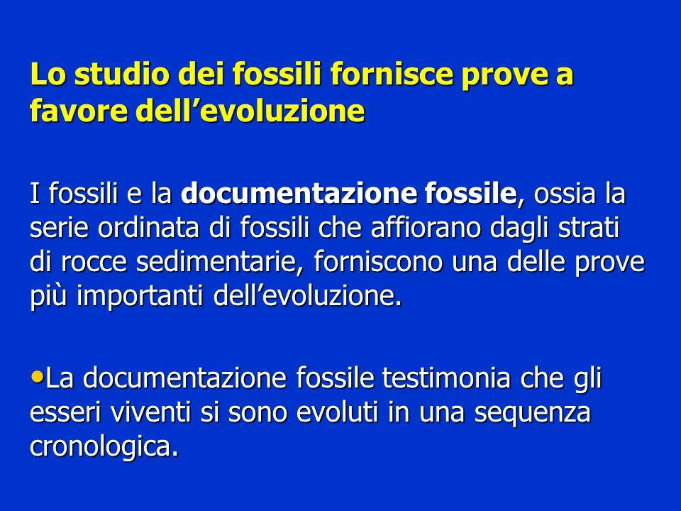 Lo studio dei fossili fornisce prove a favore dell'evoluzione I fossili e la documentazione fossile, ossia la serie ordinata di fossili che affiorano