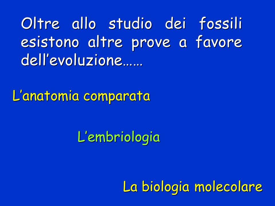 Oltre allo studio dei fossili esistono altre prove a favore dell'evoluzione…… L'embriologia L'anatomia comparata La biologia molecolare