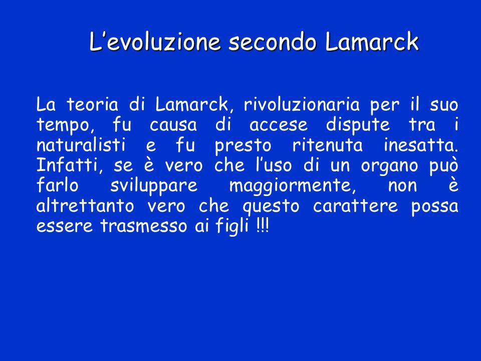 L'evoluzione secondo Lamarck La teoria di Lamarck, rivoluzionaria per il suo tempo, fu causa di accese dispute tra i naturalisti e fu presto ritenuta