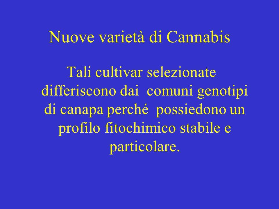 Nuove varietà di Cannabis Tali cultivar selezionate differiscono dai comuni genotipi di canapa perché possiedono un profilo fitochimico stabile e particolare.