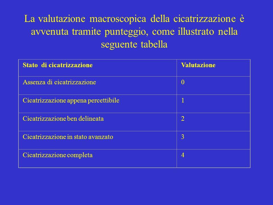 La valutazione macroscopica della cicatrizzazione è avvenuta tramite punteggio, come illustrato nella seguente tabella Stato di cicatrizzazioneValutazione Assenza di cicatrizzazione0 Cicatrizzazione appena percettibile1 Cicatrizzazione ben delineata2 Cicatrizzazione in stato avanzato3 Cicatrizzazione completa4