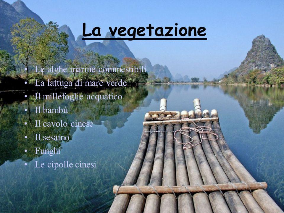 La vegetazione Le alghe marine commestibili La lattuga di mare verde Il millefoglie acquatico Il bambù Il cavolo cinese Il sesamo Funghi Le cipolle ci
