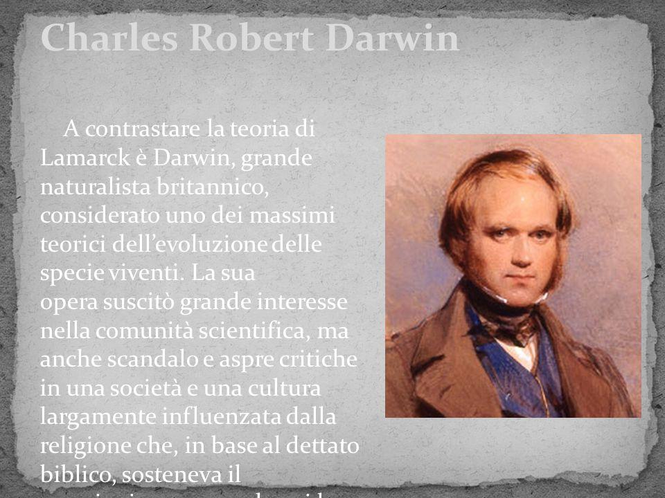 A contrastare la teoria di Lamarck è Darwin, grande naturalista britannico, considerato uno dei massimi teorici dell'evoluzione delle specie viventi.