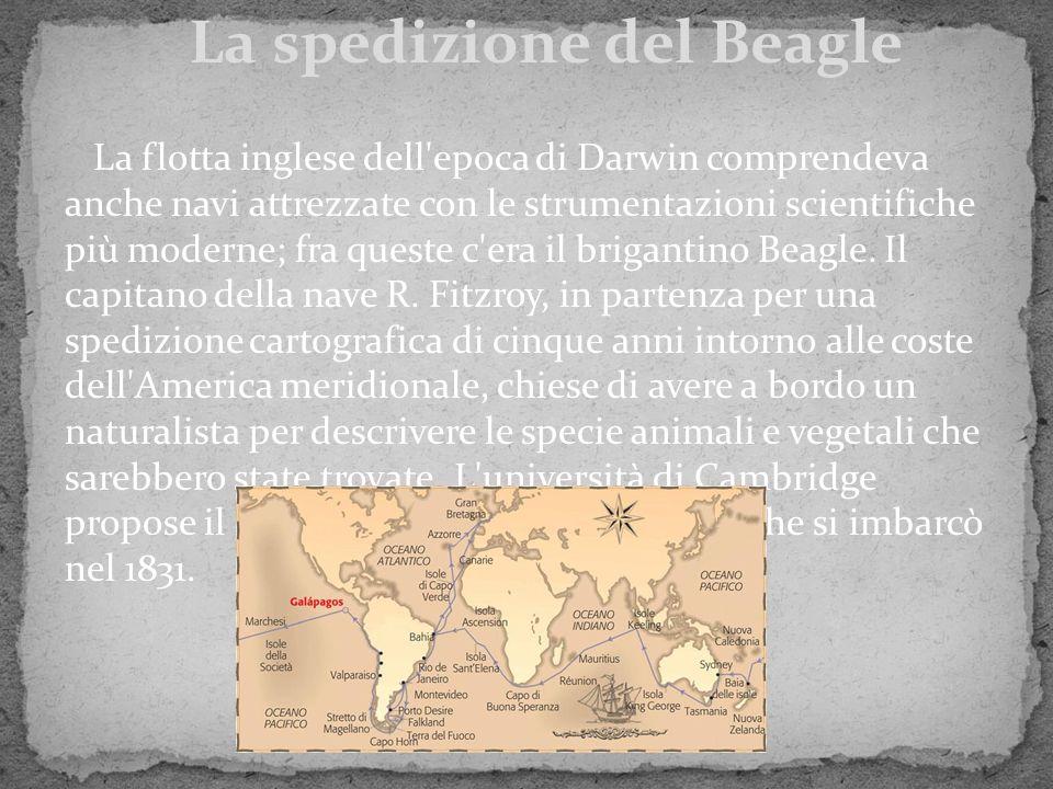 La flotta inglese dell'epoca di Darwin comprendeva anche navi attrezzate con le strumentazioni scientifiche più moderne; fra queste c'era il brigantin