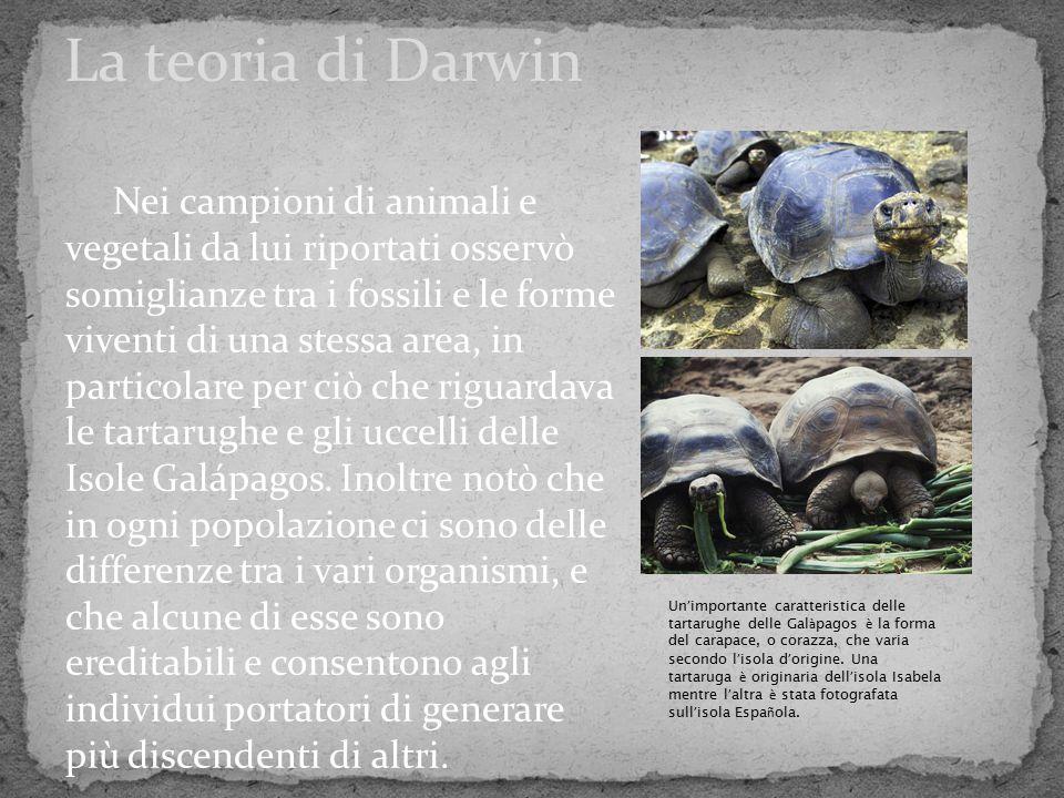 Nei campioni di animali e vegetali da lui riportati osservò somiglianze tra i fossili e le forme viventi di una stessa area, in particolare per ciò ch
