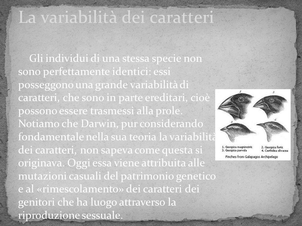 Gli individui di una stessa specie non sono perfettamente identici: essi posseggono una grande variabilità di caratteri, che sono in parte ereditari,