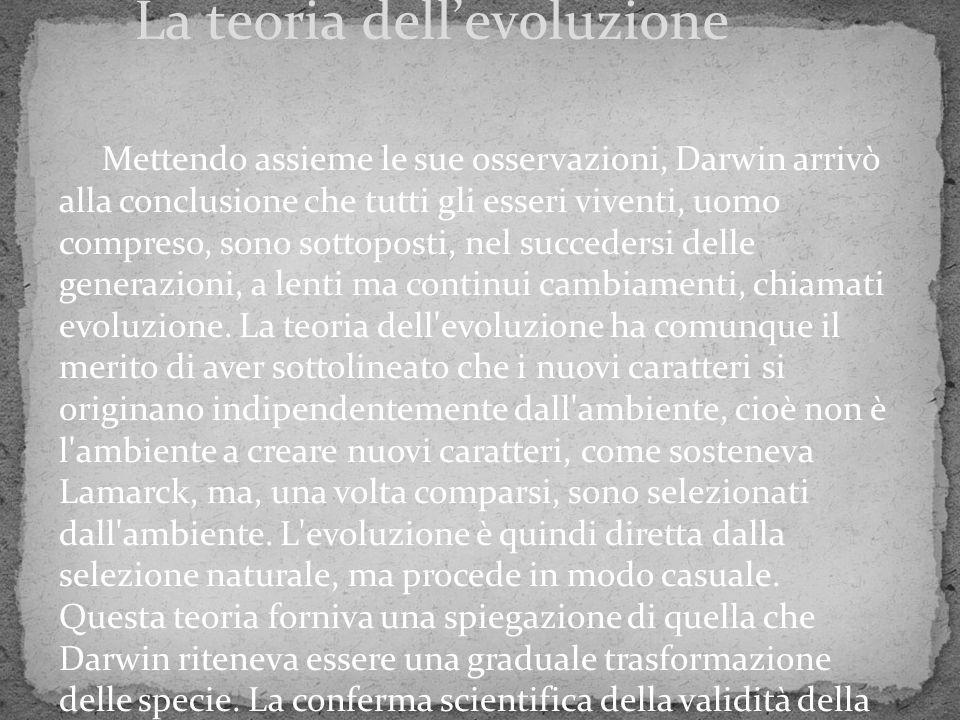 Mettendo assieme le sue osservazioni, Darwin arrivò alla conclusione che tutti gli esseri viventi, uomo compreso, sono sottoposti, nel succedersi dell