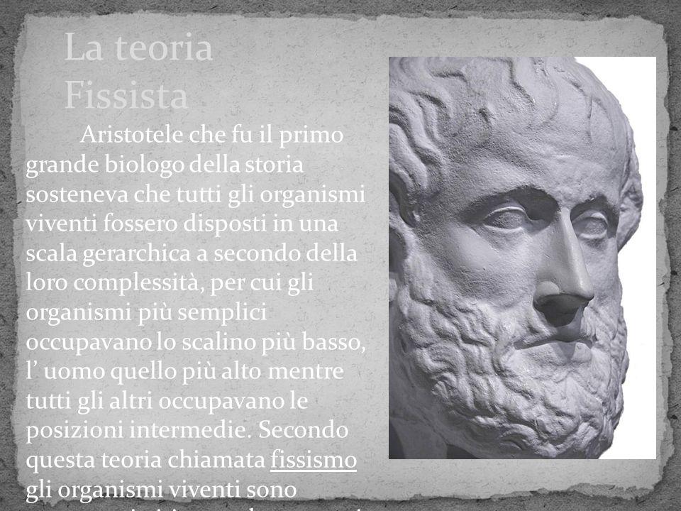 Aristotele che fu il primo grande biologo della storia sosteneva che tutti gli organismi viventi fossero disposti in una scala gerarchica a secondo de