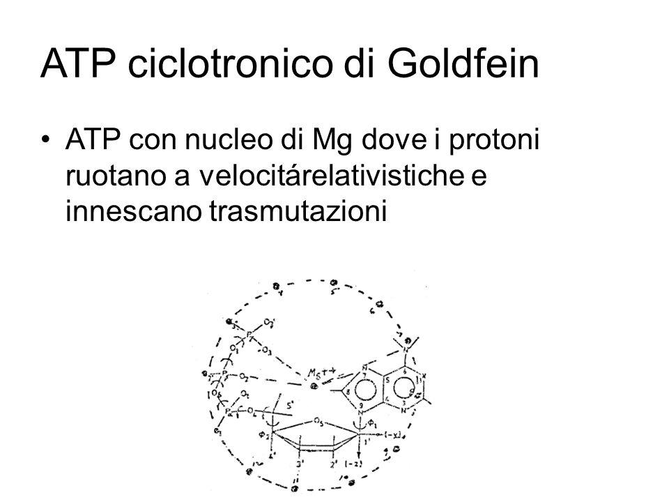 ATP ciclotronico di Goldfein ATP con nucleo di Mg dove i protoni ruotano a velocitárelativistiche e innescano trasmutazioni