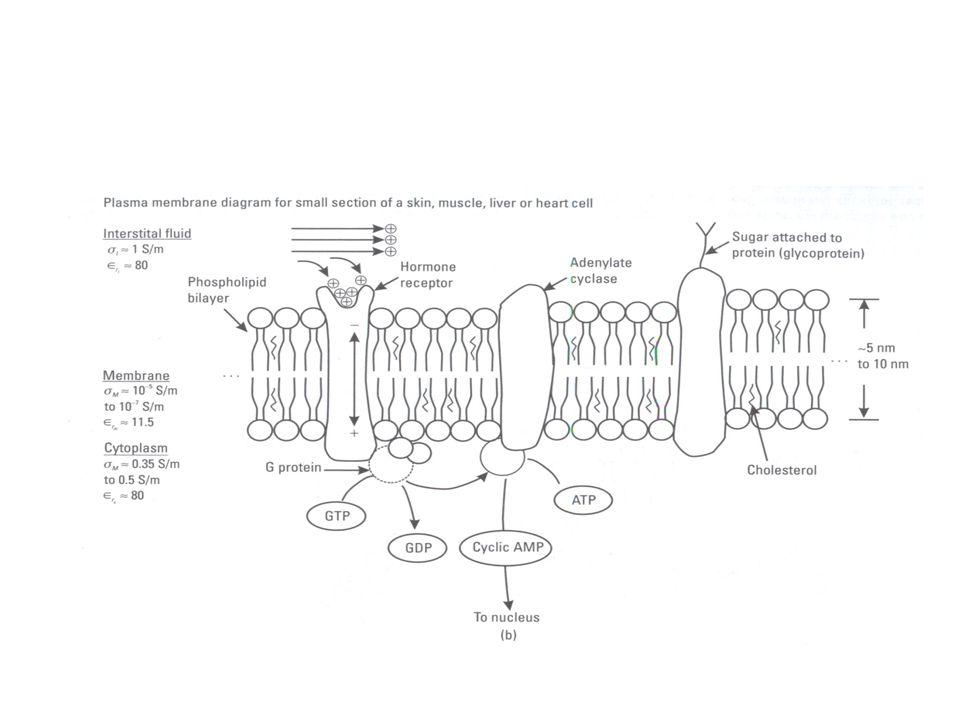 Colonie microbiche ESTREMOFILE granulari ad altissima efficienza selezionate aChernobyl,estremamenteefficaci x depurazione radionuclidi e metalli pesanti Granulated Microbial Sorbent is an active basis of those Biotechnologies.