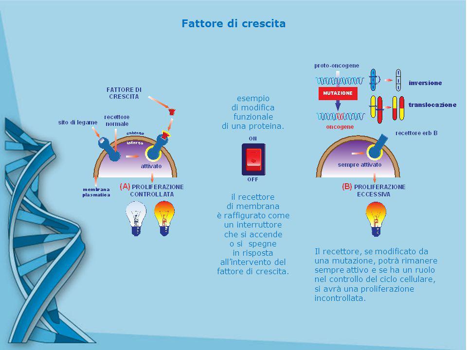 Fattore di crescita il recettore di membrana è raffigurato come un interruttore che si accende o si spegne in risposta all'intervento del fattore di crescita.