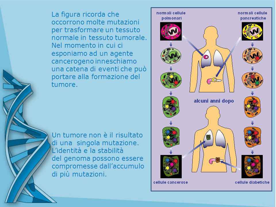 La figura ricorda che occorrono molte mutazioni per trasformare un tessuto normale in tessuto tumorale.
