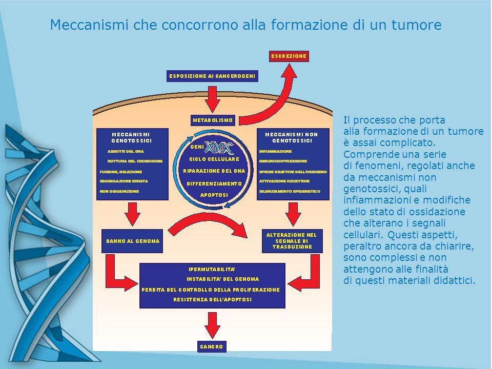 Il processo che porta alla formazione di un tumore è assai complicato.