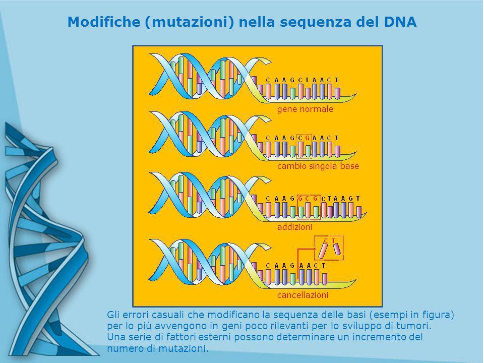 Gli errori casuali che modificano la sequenza delle basi (esempi in figura) per lo più avvengono in geni poco rilevanti per lo sviluppo di tumori.