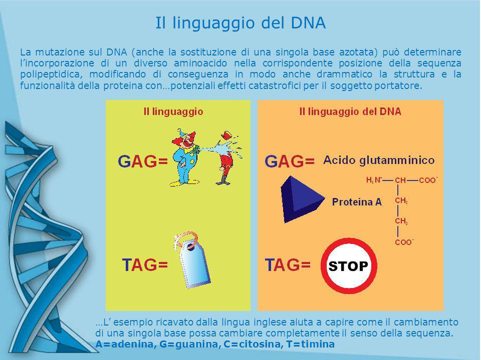 La mutazione sul DNA (anche la sostituzione di una singola base azotata) può determinare l'incorporazione di un diverso aminoacido nella corrispondente posizione della sequenza polipeptidica, modificando di conseguenza in modo anche drammatico la struttura e la funzionalità della proteina con…potenziali effetti catastrofici per il soggetto portatore.