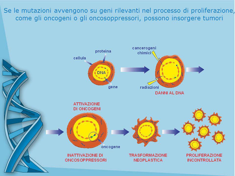 Se le mutazioni avvengono su geni rilevanti nel processo di proliferazione, come gli oncogeni o gli oncosoppressori, possono insorgere tumori