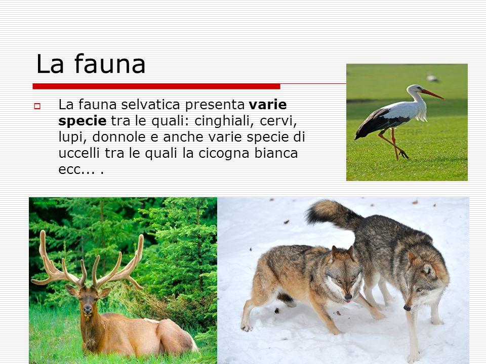  La fauna selvatica presenta varie specie tra le quali: cinghiali, cervi, lupi, donnole e anche varie specie di uccelli tra le quali la cicogna bianc