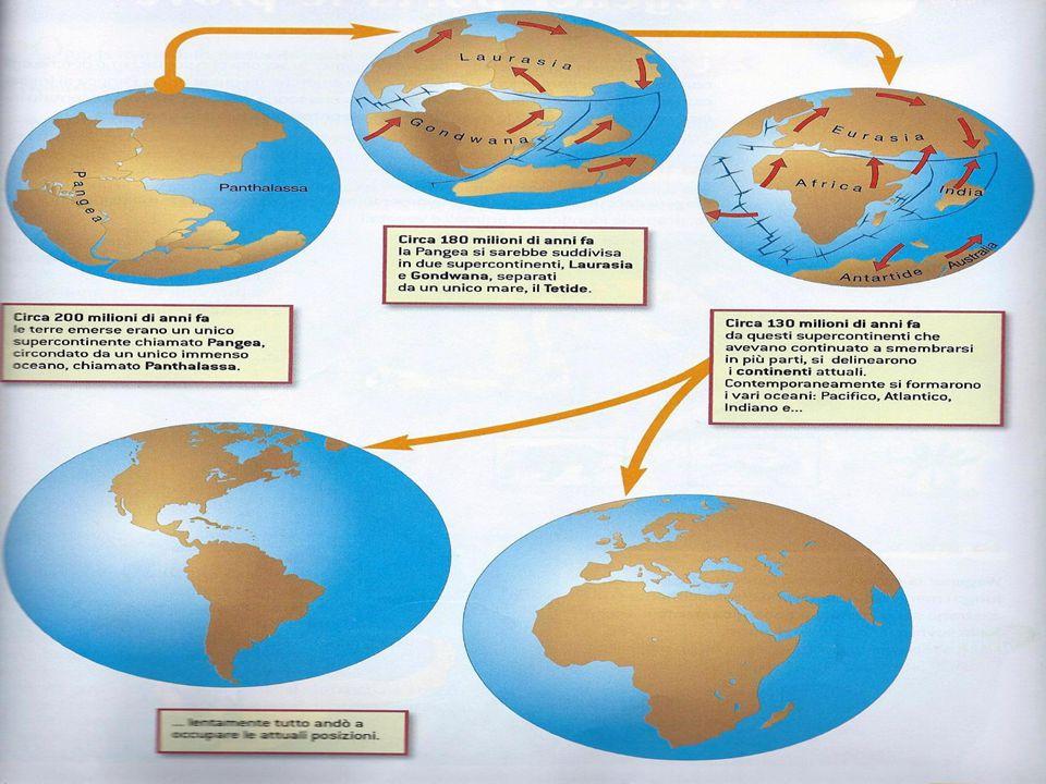 Le prove di Wegener La teoria della deriva dei continenti fu accertata da Wegener che aveva dimostrato con la prova paleontologica e quella geologica, fossili della stessa specie mostrando dei ritrovamenti di fossili della stessa specie (dei rettili) che vivevano ai margini dei continenti dove si erano divisi in passato dalla Pangea.