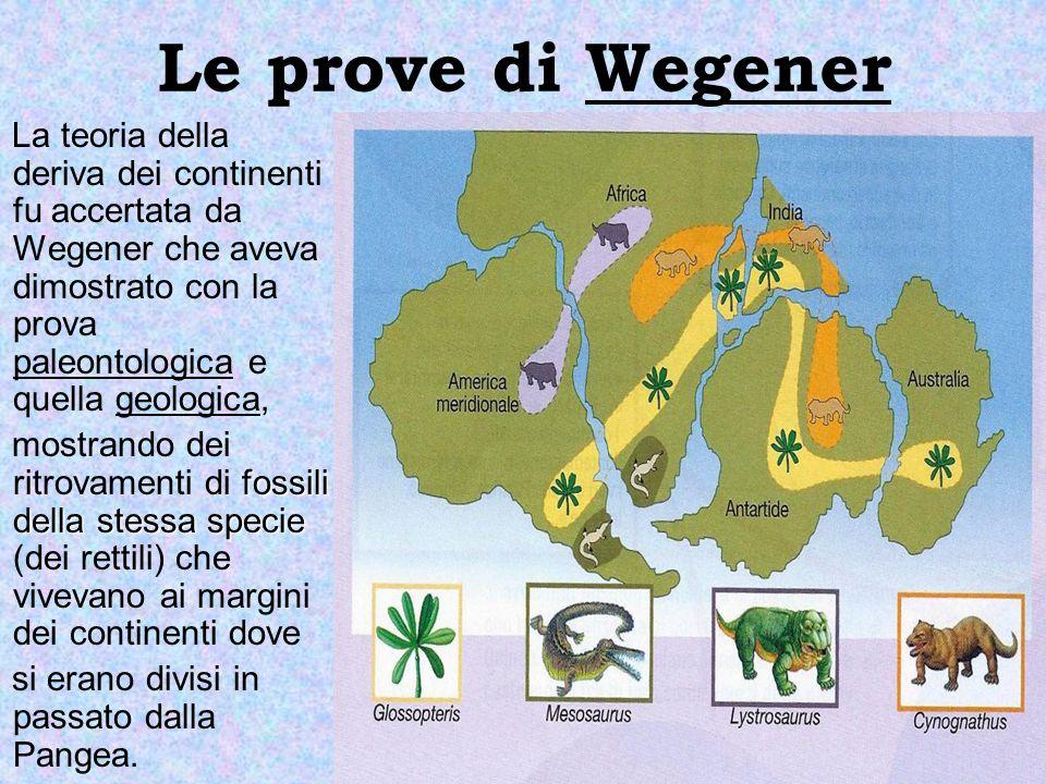 Le prove di Wegener La teoria della deriva dei continenti fu accertata da Wegener che aveva dimostrato con la prova paleontologica e quella geologica,