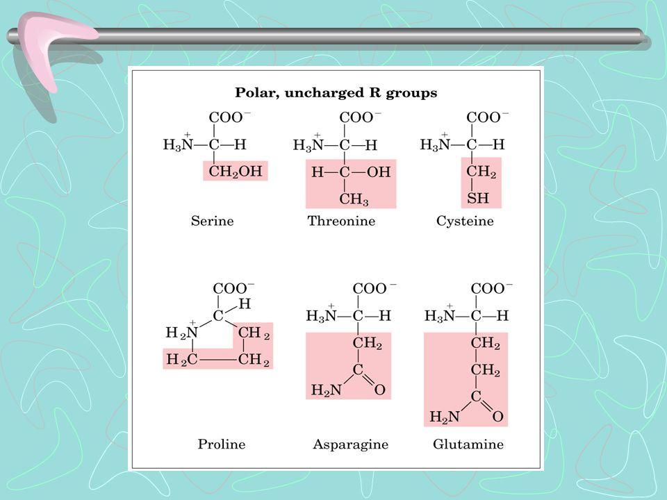 L'unico neutro a pH 7