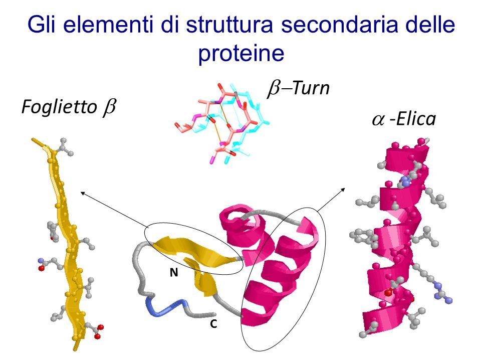 Gli elementi di struttura secondaria delle proteine C N  -Elica  Turn Foglietto 
