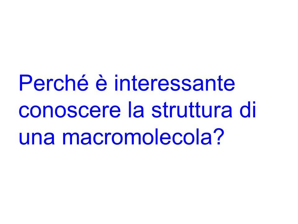 Perché è interessante conoscere la struttura di una macromolecola?
