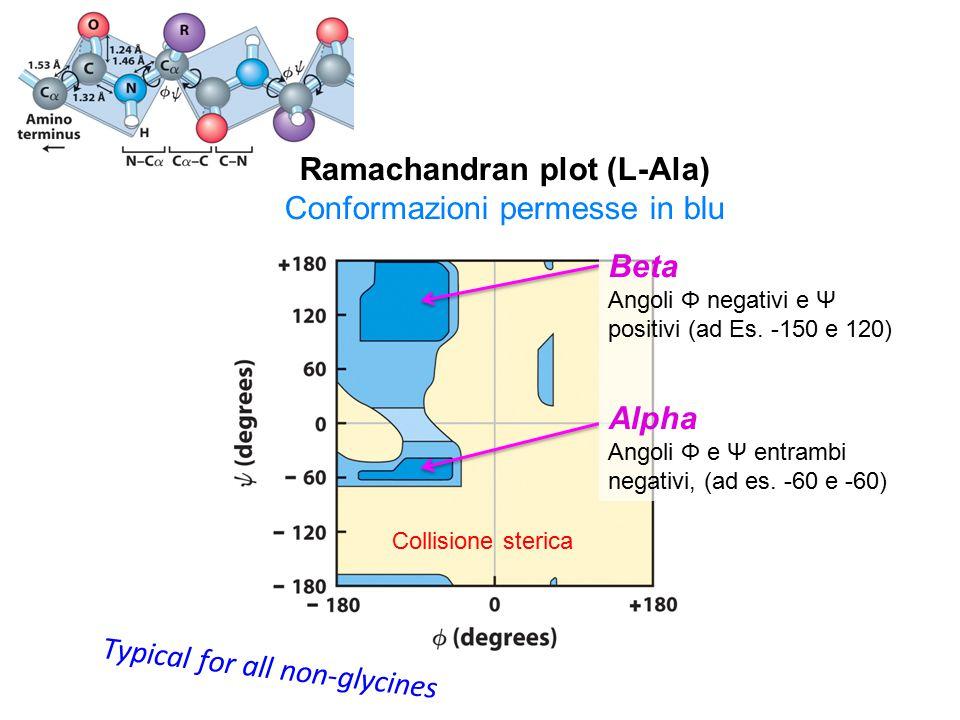 Typical for all non-glycines Collisione sterica Ramachandran plot (L-Ala) Conformazioni permesse in blu Beta Angoli Φ negativi e Ψ positivi (ad Es.